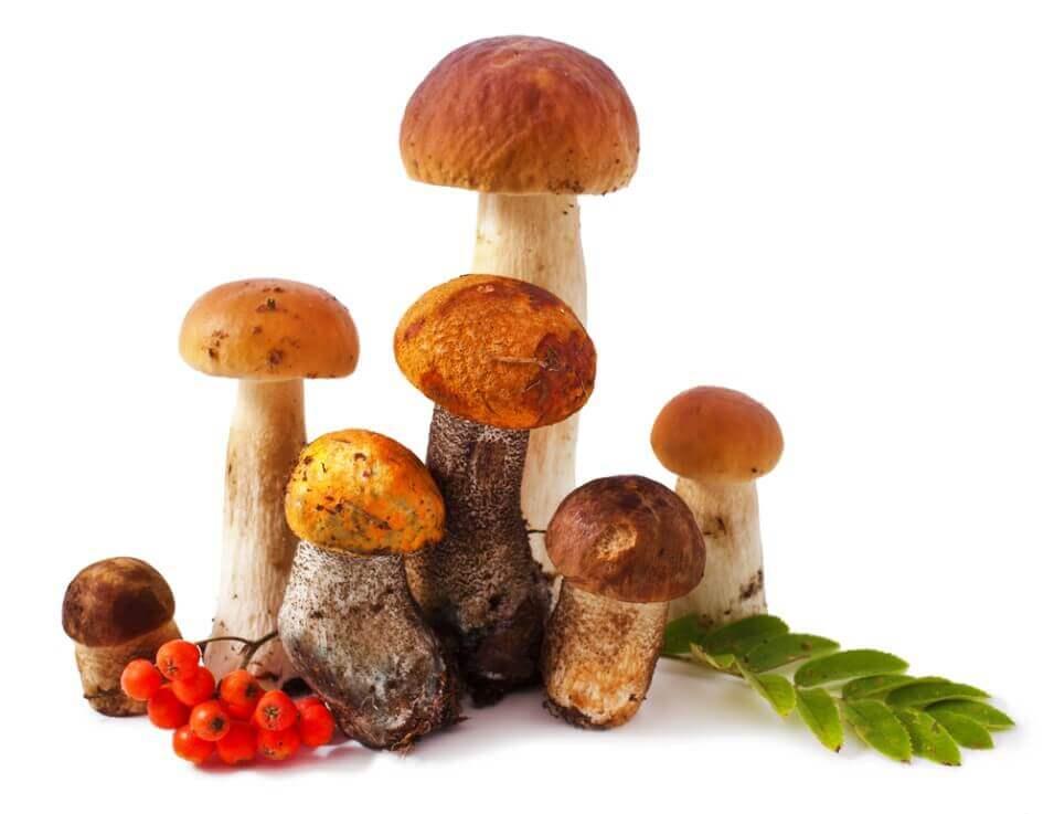 Mushrooms and rowanberry